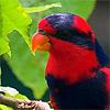 radiantchicken: (hey a parrot)