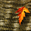branchandroot: orange leaf on a mat (fall leaf on mat)