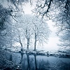 lilyleia78: (winter trees)