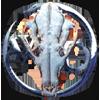 amokk: (WTF skull)
