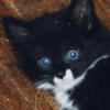allen: kitten picture (kitten)