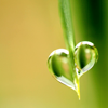 unavee: Heart-shaped water droplet on the end of a leaf (heart)