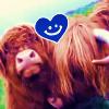 koalawedding: (Scottish Highlander love)