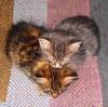 marcicat: (kitteh heart)