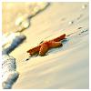 kelincihutan: (starfish)