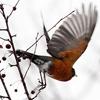 queenlua: (Robin)