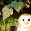 avon7: (owl)