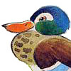 pedanther: Watercolour picture of a cheerful-looking duck (pic#725901)