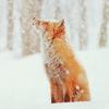 queenlua: (Fox)