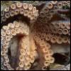 mistressjinx: tentacles 3 (tentacles 3)