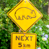 "veleda_k: Road sign that has picture of a wombat and says ""Next 5 km"" (Wombat crossing)"
