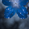 dream_weaver: (blueflower1)