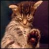 chimerically: (bigfoot kitteh)