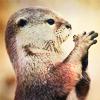 crookedspoon: (otter)