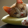 elizaria: cat laying on a pillow (cat- lazy)