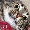 telophase: (Cat - :3)