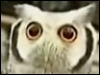 animeserena: A dumbfounded owl. (Owl: WTF 1-No text)