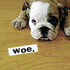 "quirkyblogger: Photo of a puppy with a sign that reads ""woe."" (woedog)"