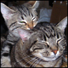 telophase: (Cats - Sora and Nefer)