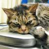 tielan: (cat01)