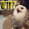 telaryn: (WTF Owlet)