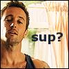 sinensis: Steve, looking interrogative (H50) (sup?)