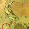 revolutions: A sketch of a fish in water. (fish swimming)