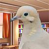 nobodytomourn: ([canon] daytime bird)