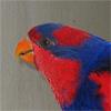 radiantchicken: (squawk)