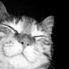 jaxadorawho: (Animals ☆ Cat ~ Happy :3)