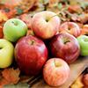 jaxadorawho: (Seasonal ☆ Autumn ~ apples)