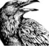 alas_lenore: (raven 2)