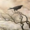alas_lenore: (raven 3)
