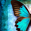 msmcknittington: a blue butterfly (butterfly)
