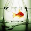 dodificus: (swim)
