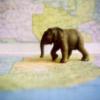 dodificus: (around the world)