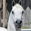 wingsister: (horse: headshot)
