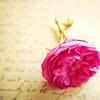 jaxadorawho: (Seasonal ☆ Valentine's Day ~ Love Letter)