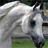 wingsister: (horse: sideshot)