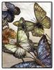 a_passer_by: (бабочки)
