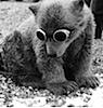 partlyopenbook: Polar Bear cub in welder's goggles. (bear)