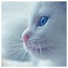 pretzels: (kitten)