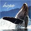 scrollgirl: humback whale breaching water; text: hope (misc hope)