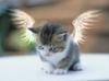 twilightday: (ангел)
