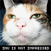 nonelvis: (CAT inu is not impressed)