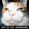 nonelvis: (CAT inu is not impressed)
