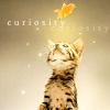 omnipotent: (Kitten)