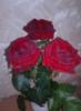 smurfettes: (розы)