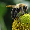 nonelvis: (GARDEN bee)