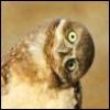 raaven: (wtf owl)